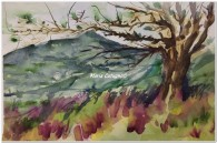 Albero - Acquerello - cm.35.5x51 - carta 300gr.